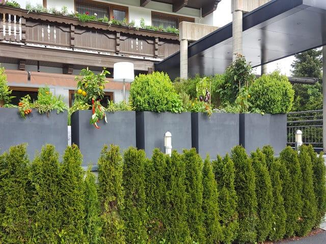 Terrassenabgrenzung mit Hecken als Sichtschutz